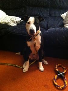 Our new dog, Finn