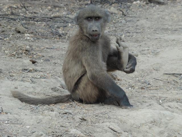 Namibia 620.JPG